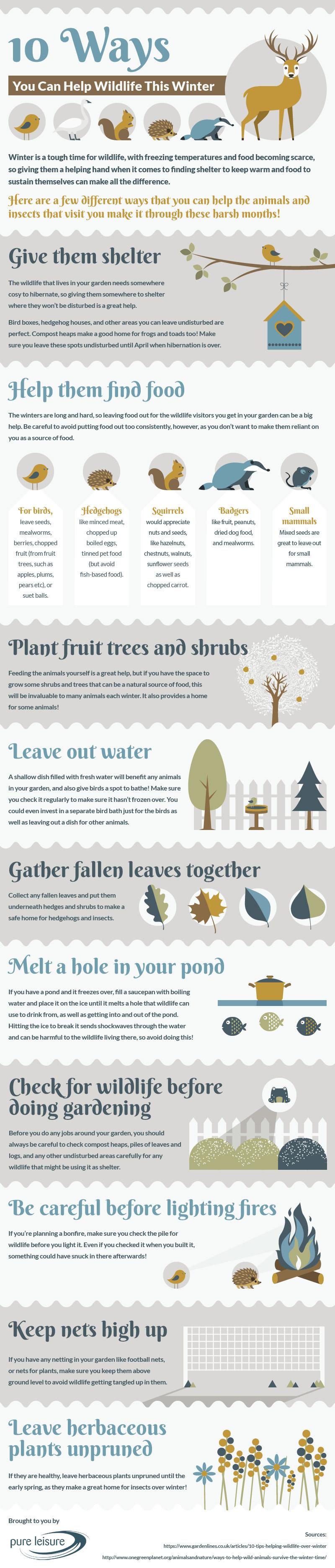 Help Wildlife This Winter