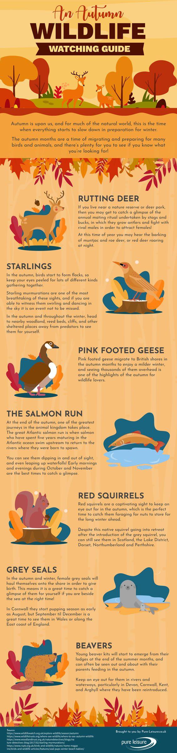 Autumn Wildlife Watching Guide