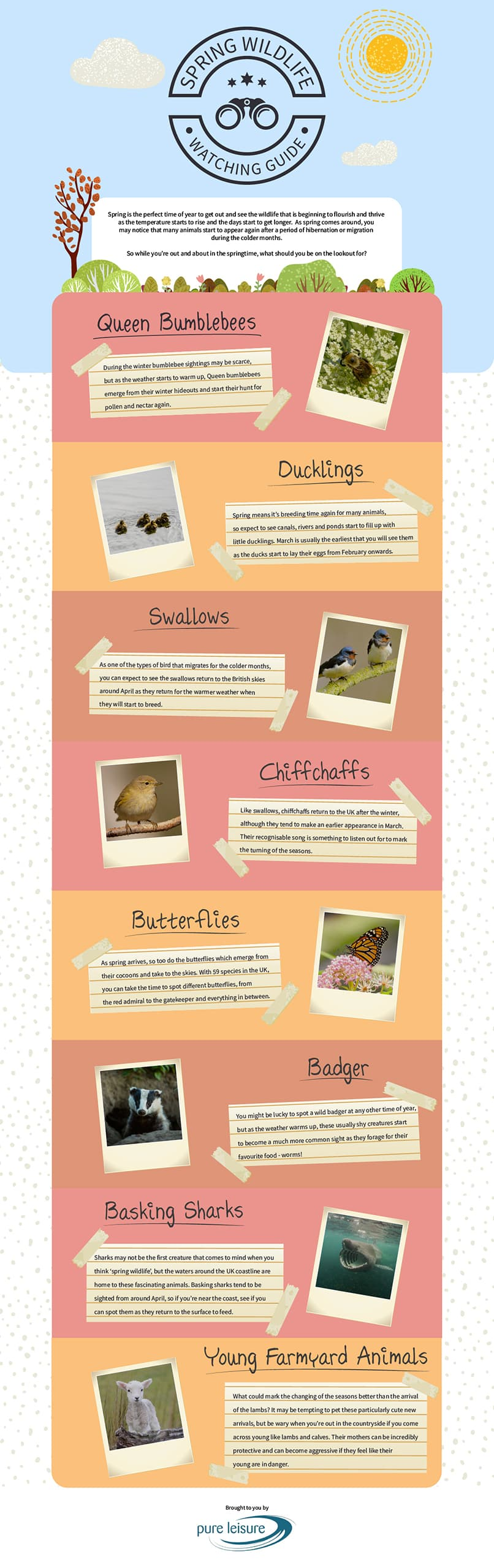 Spring Wildlife Watching Guide Infographics by Pure Leisure